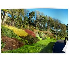 Winter Colours ~ Langmoor-Lister Gardens Poster