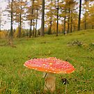 Dartmoor: Fungi on the Forest Floor. by Rob Parsons