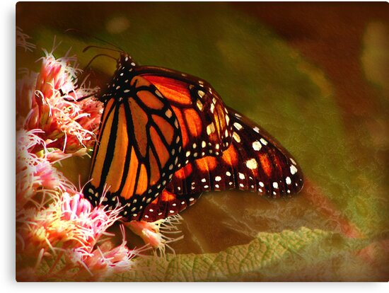 I'm a Beautiful Butterfly by vigor
