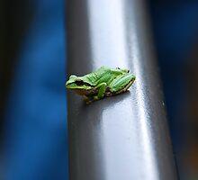 Tree Frog - Salt Spring Island, BC by marchlight