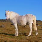 Dartmoor: All White Now by Rob Parsons
