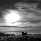 Cornwall: The Sheep and the Sun in Black and White by Rob Parsons