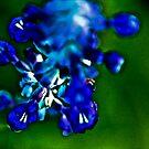 Blur by Kornrawiee