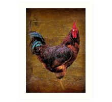 A Country Rooster Art Print