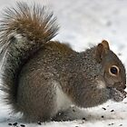 Eastern Gray Squirrel - 2 by KAREN SCHMIDT