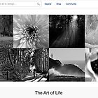 Nature in Black and White - 15 January 2011 by The RedBubble Homepage