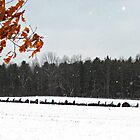 Frosted Bales by KathrynSylor