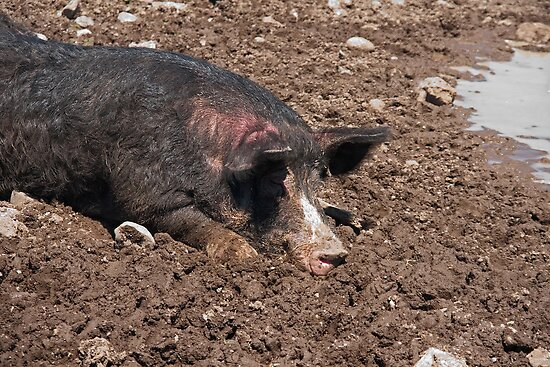 As Happy as a Pig in...Shhhh...he's sleeping.... by Mike Oxley