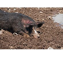 As Happy as a Pig in...Shhhh...he's sleeping.... Photographic Print