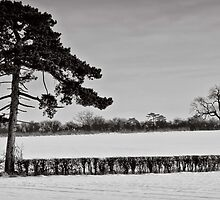 Slices of winter # 3 by clickinhistory