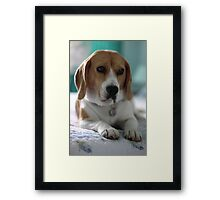 A Flash Portrait Framed Print