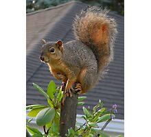 Tree Topper Photographic Print