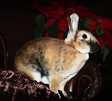 Christmas Bunny by TickerGirl