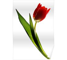red tulip - #2 Poster