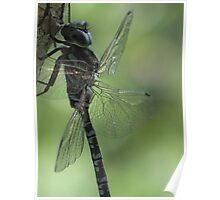 Dragonfly Blues and Greens Poster