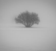 Lonely Tree by mikewheels
