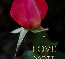 rose bud love card by dedmanshootn