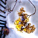 January Garden 1 by Sarah Butcher