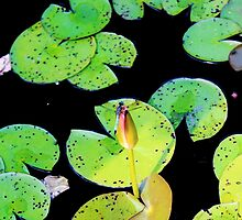 Dragonfly on Lilypad by dreamydesigns