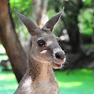 Eastern Grey Kangaroo by Rebecca Holman