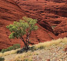 Kata Tjuta - The Olgas by Andrew Brooks