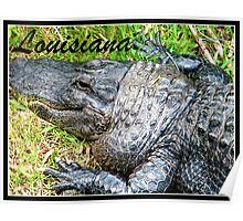 Louisiana Gator Poster