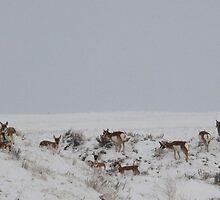 On the range by Warren Arnholtz