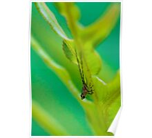 Leafhopper Nymph I Poster