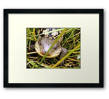 blue tongue lizard Framed Print