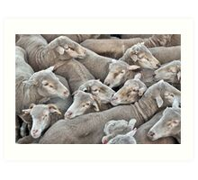 Truckload of Sheep Art Print