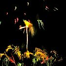 Floral Fireworks by jsmusic