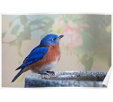Mr. Bluebird, you make me happy! Poster