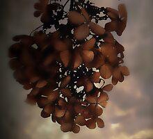 Heaven has Flowers in Winter by Judi Taylor