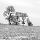 Field of Trees by Brian Gaynor
