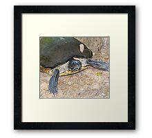 Mrs Turtle Framed Print