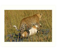 Leopard dragging kill to safe place! Art Print