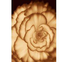 Carmel Cream ©  Photographic Print