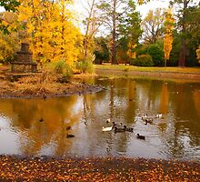 Malmsbury VIC Australia - the colours of autumn - early afternoon swim by Margaret Morgan (Watkins)