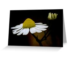 chamomile flower Greeting Card