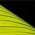 Palm (1) by Chris Cohen