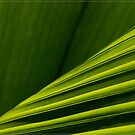 Palm (2) by Chris Cohen