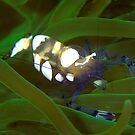 fluro shrimp by Carle Parkhill