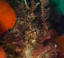 Tasseled Anglerfish by MattTworkowski