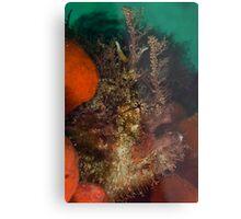 Tasseled Anglerfish Metal Print