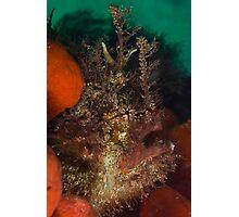 Tasseled Anglerfish Photographic Print