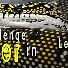 Challenge Banner by Roxy66