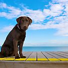 By The Yellow Line by { wetnosefotos.com  }