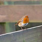 Perching Robin by Dean Messenger