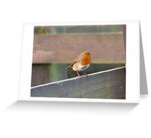 Perching Robin Greeting Card