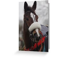 Kauto Star Greeting Card